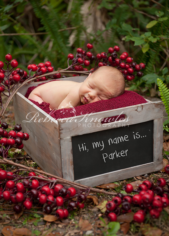 newborn portraits mobile Alabama